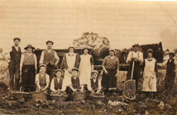 Potato harvesting: Early 20th century hand picking